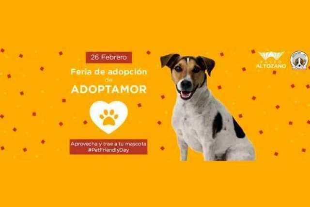Feria-de-adopcion-Morelia