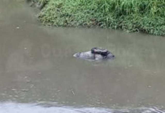 cadaver rio Morelia